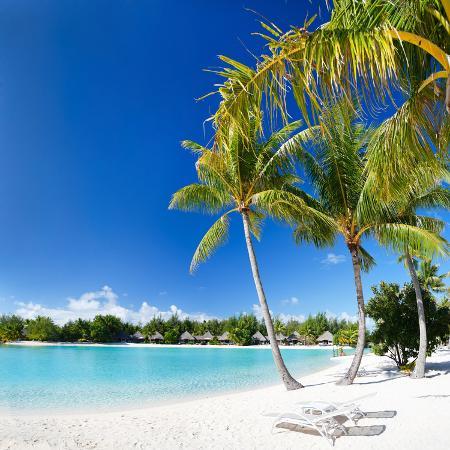 blueorange-studio-beautiful-beach-with-coconut-palms-on-bora-bora-island-in-french-polynesia