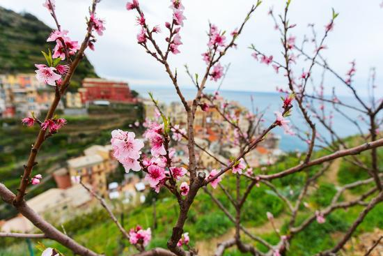 blueorange-studio-spring-blooming-cherry-tree-with-background-scenic-view-of-colorful-houses-of-manarola-village-cin
