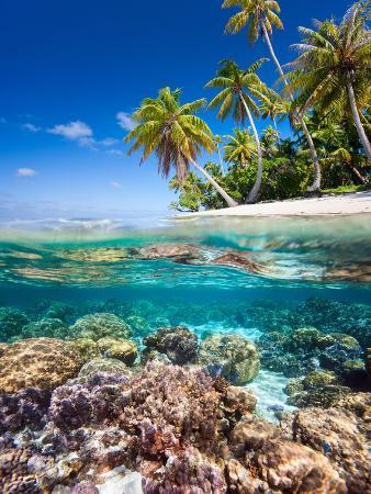 blueorangestudio-tropical-island
