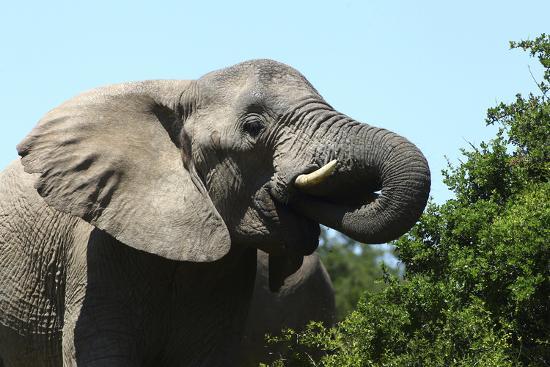 bob-langrish-african-elephants-069