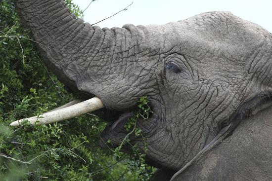 bob-langrish-african-elephants-134