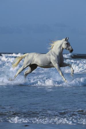 bob-langrish-dream-horses-001