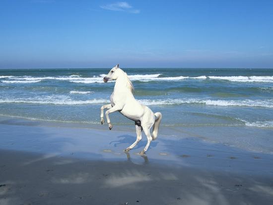 bob-langrish-dream-horses-006