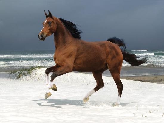 bob-langrish-dream-horses-007
