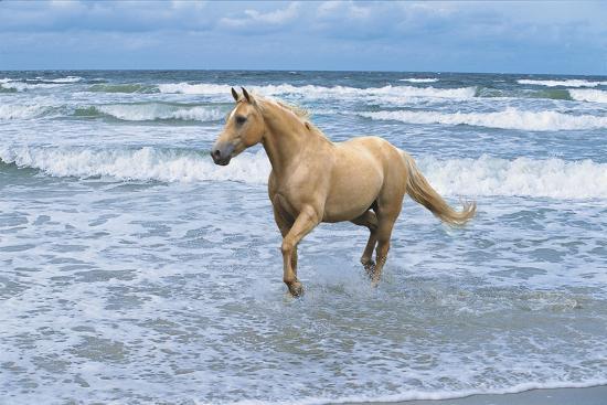 bob-langrish-dream-horses-009