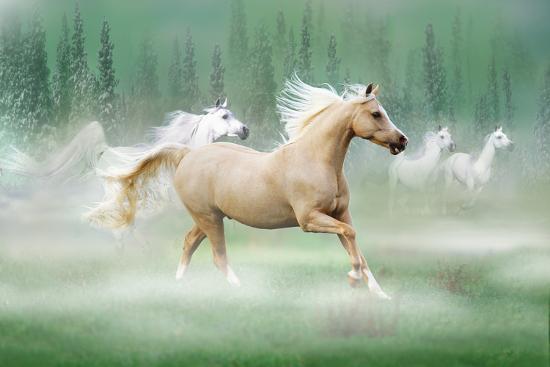 bob-langrish-dream-horses-030