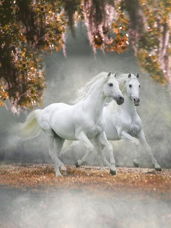 bob-langrish-dream-horses-072