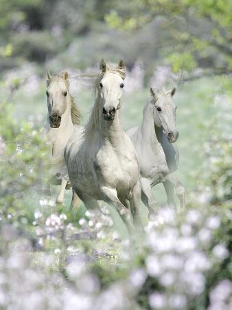 bob-langrish-dream-horses-074