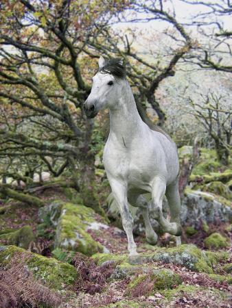 bob-langrish-fantasy-horses-14