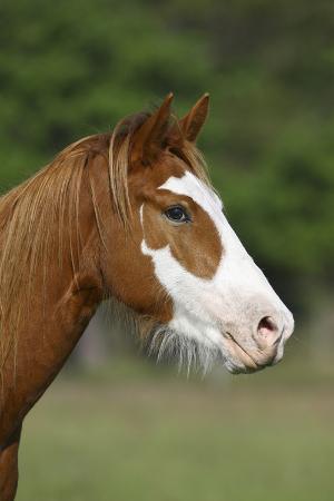 bob-langrish-quarter-horses-013