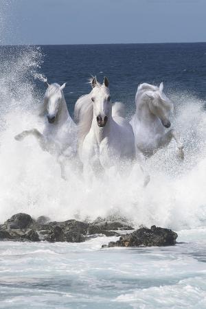 bob-langrish-storm-riders