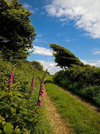 boreen-near-ballyvooney-copper-coast-county-waterford-ireland