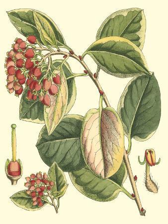 botanical-fantasy-iv