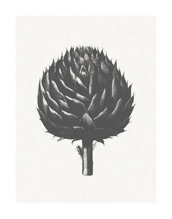 botanical-series-artichoke-ivory-ink