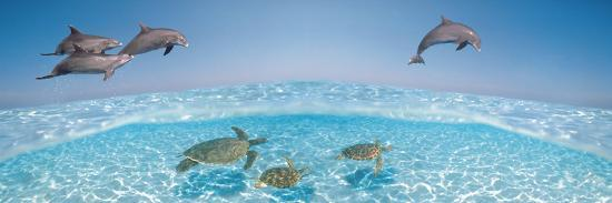 bottlenose-dolphin-jumping-while-turtles-swimming-under-water