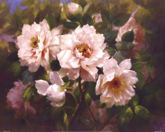 bowmy-bowmy-full-blossom-ii