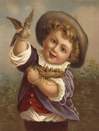 boy-holding-a-bird-and-the-bird-s-nest