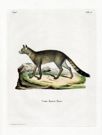 brazilian-fox
