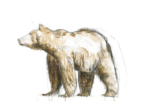 brenna-harvey-brown-bear-2