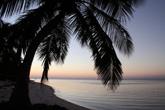 brent-anderson-palm-tree-sunset