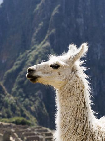 brent-winebrenner-llama-lama-glama
