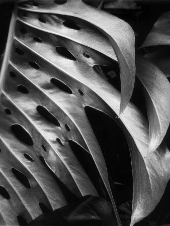 brett-weston-leaf-composition