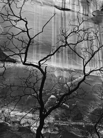 brett-weston-rock-wall-and-tree