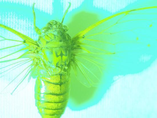 bright-green-insect-on-blue-background