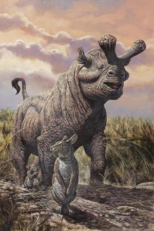 brontops-and-palaeolagus-rabbit-of-the-early-miocene-epoch