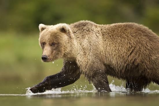 brown-bear-katmai-national-park-alaska