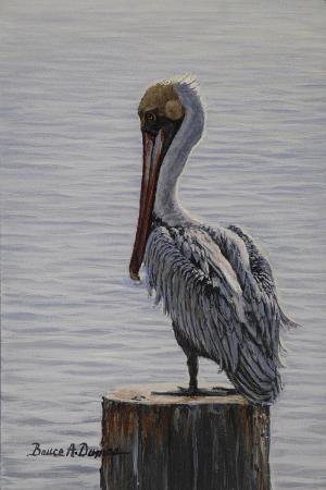 bruce-dumas-resting-pelican