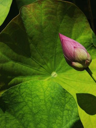 bruno-ehrs-lotus-flower-at-bang-pa-in-summer-palace-in-thailand