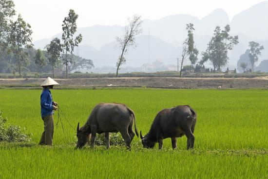bruno-morandi-tam-coc-ninh-binh-area-vietnam-indochina-southeast-asia-asia