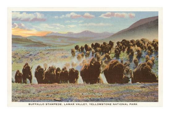 buffalo-stampede-yellowstone-national-park