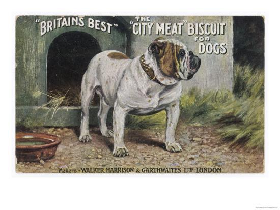 bulldog-stands-outside-his-kennel-in-an-advertisement-for-city-meat-dog-biscuits