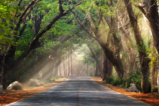 bundit-jonwises-abstract-background-of-route-and-journey-amidst-the-big-tree-and-beautiful-nature