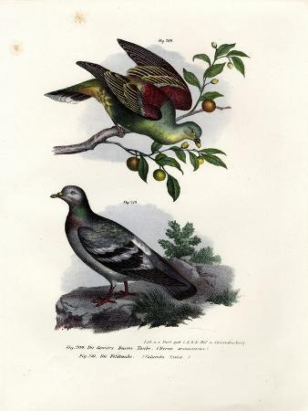 buru-green-pigeon-1864
