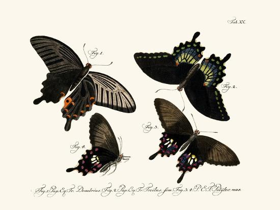 butterflies-1783-1806