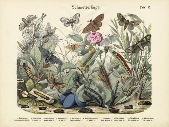 butterflies-c-1860