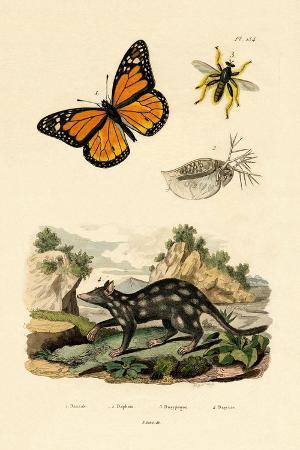 butterfly-1833-39