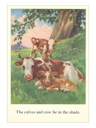 calves-and-cows-lie-in-shade