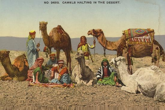 camels-halting-in-the-desert