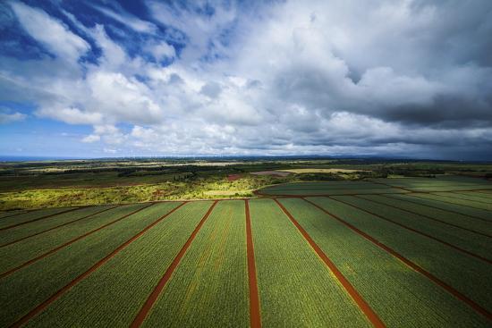 cameron-brooks-pineapple-fields