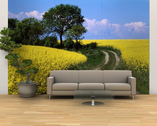 canola-farm-yellow-flowers-germany