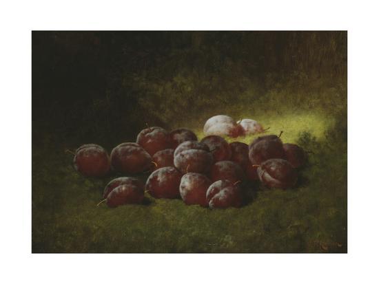 carducius-plantagenet-ream-purple-plums-1895