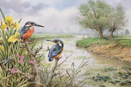 carl-donner-kingfishers-on-the-riverbank