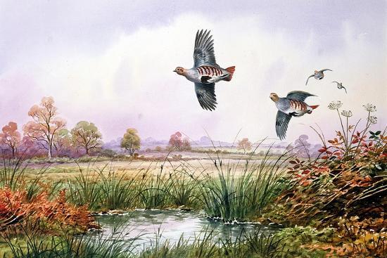 carl-donner-partridge-in-flight