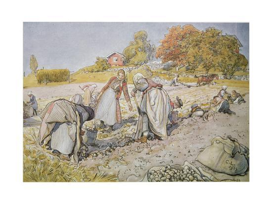 carl-larsson-digging-potatoes-1905