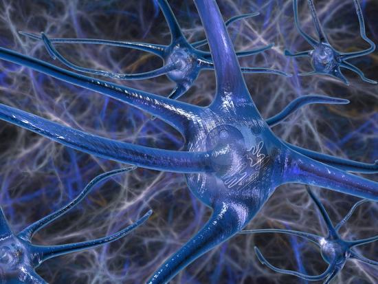 carol-mike-werner-biomedical-illustration-of-neurons