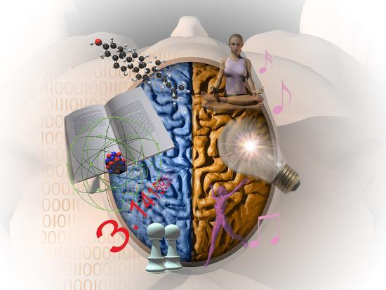 carol-mike-werner-illustration-showing-the-attributes-of-left-and-right-brain-activity-in-humans